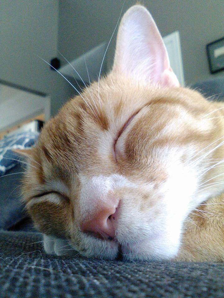 Deep nap