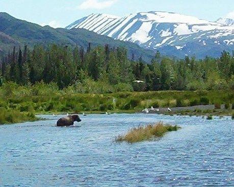 My Gallery Kenai, Alaska | Spotted®  BROWN BEAR FISHING-By: kujoe