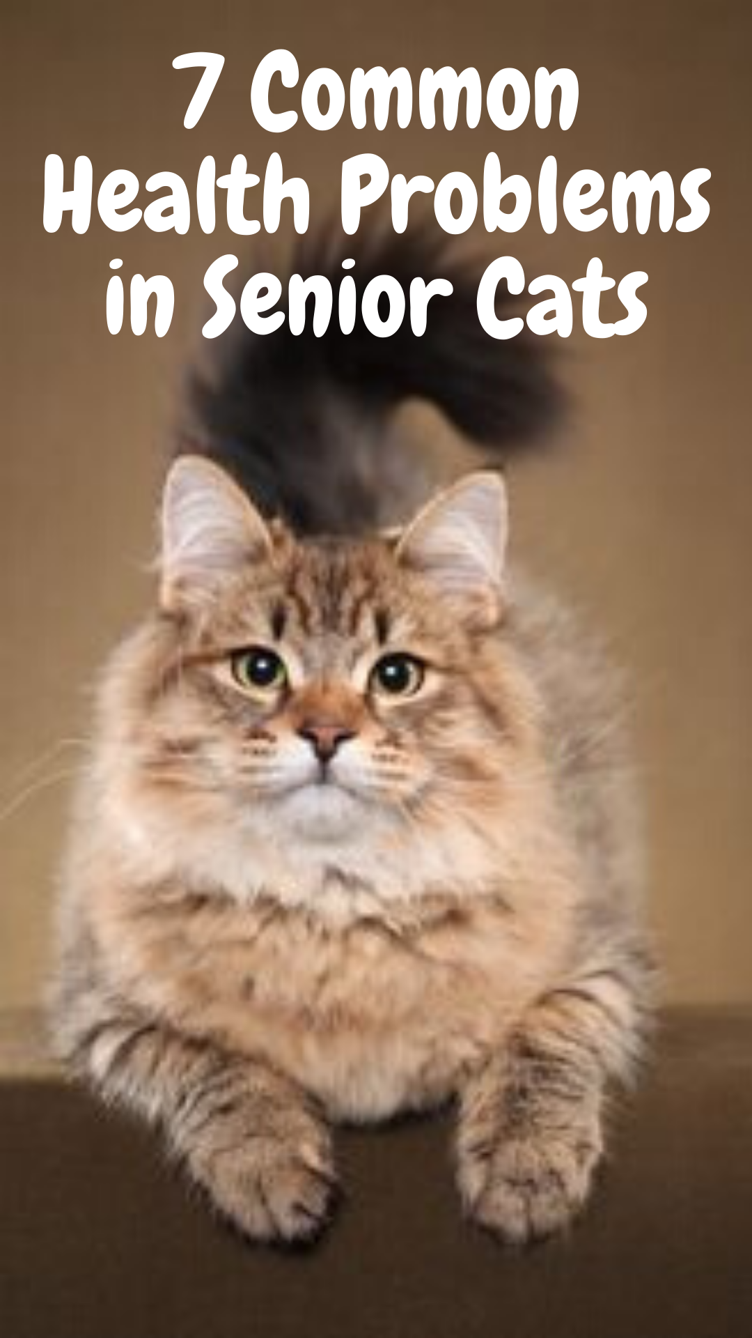 7 Common Health Problems In Senior Cats Cat Health Problems Cats Senior Cat Care