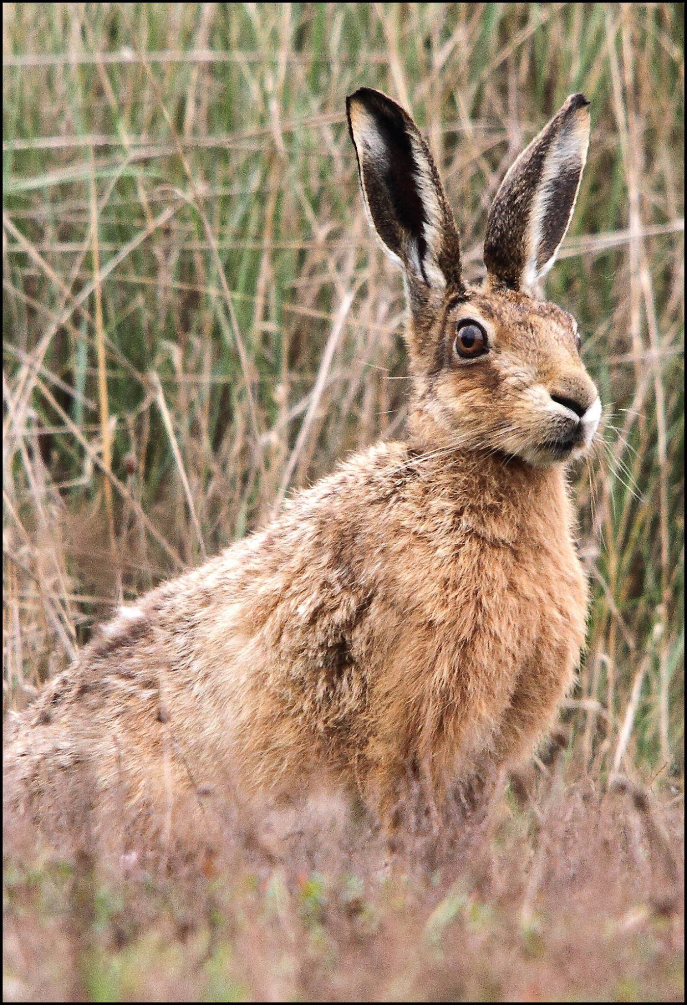Pin by Christine SchatterRenaud on Hares photos Wild