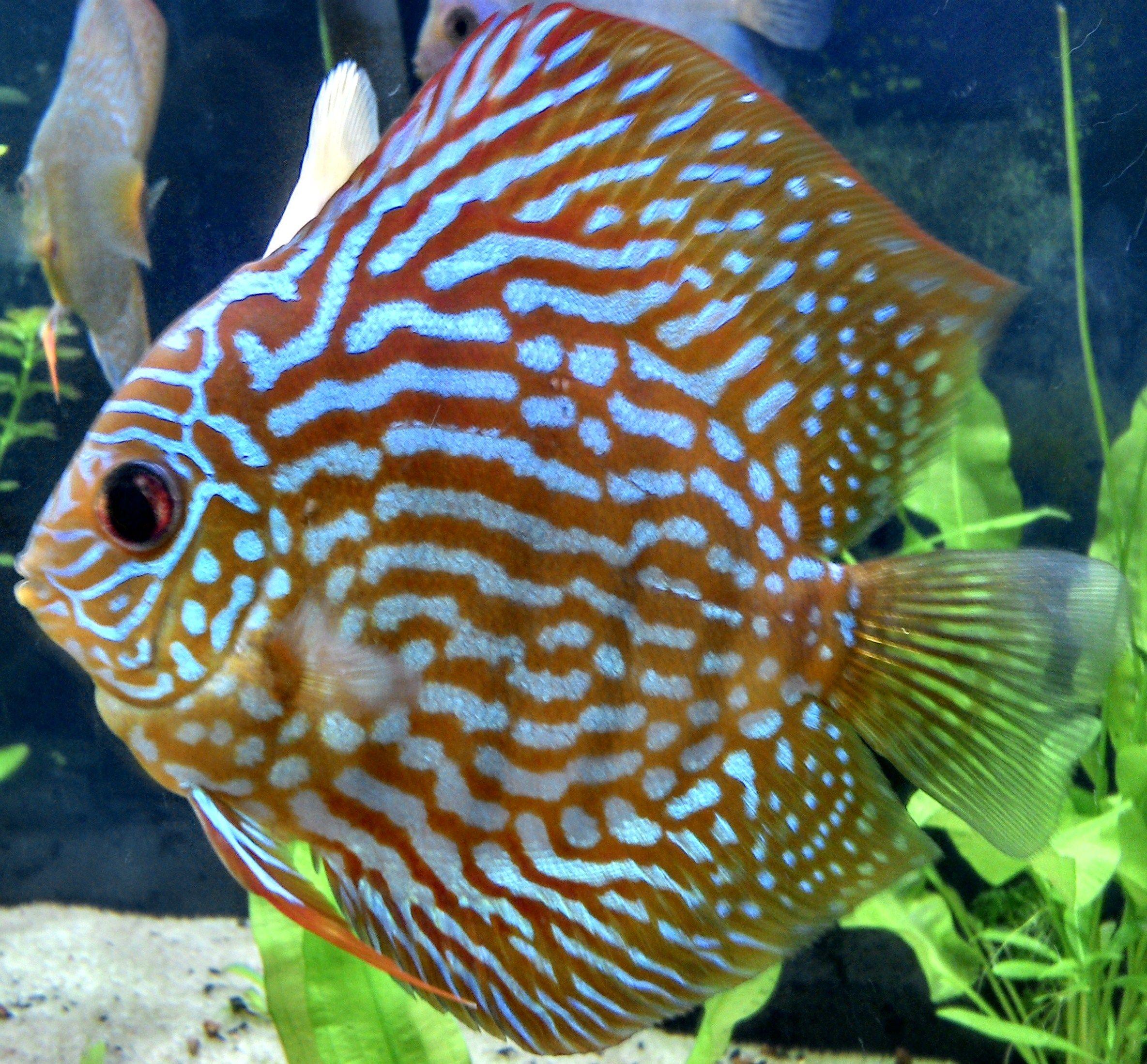2d0d161f548a069e6a8bd91ac1f6bbc9 Frais De Aquarium Tropical Schème