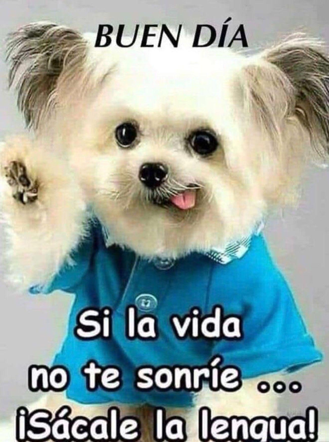 Buenos Dias Imagenes Para Whatsapp Buenos Dias Con Gatos Frases