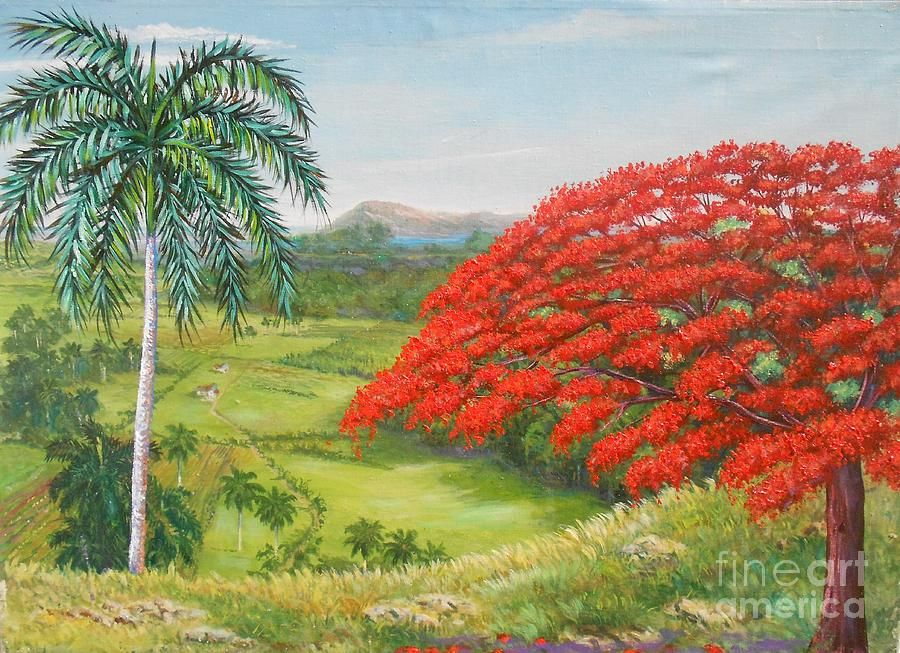 Cuban Landscape With Flamboyan And Palm Trees