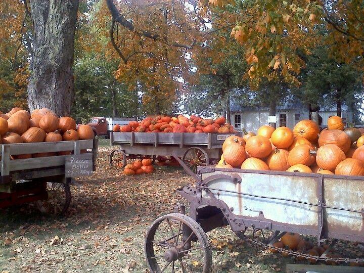Howell's Pumpkin Patch, Cummings, Iowa Pumpkin patch
