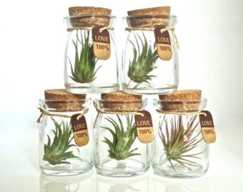 SALE Five 100% Love Cute Little Air Plant Habitats, Air Plant Glass Jar  Terrariums