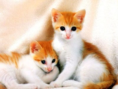 Cute Kittens Cute Baby Cats Baby Cats Cute Animals