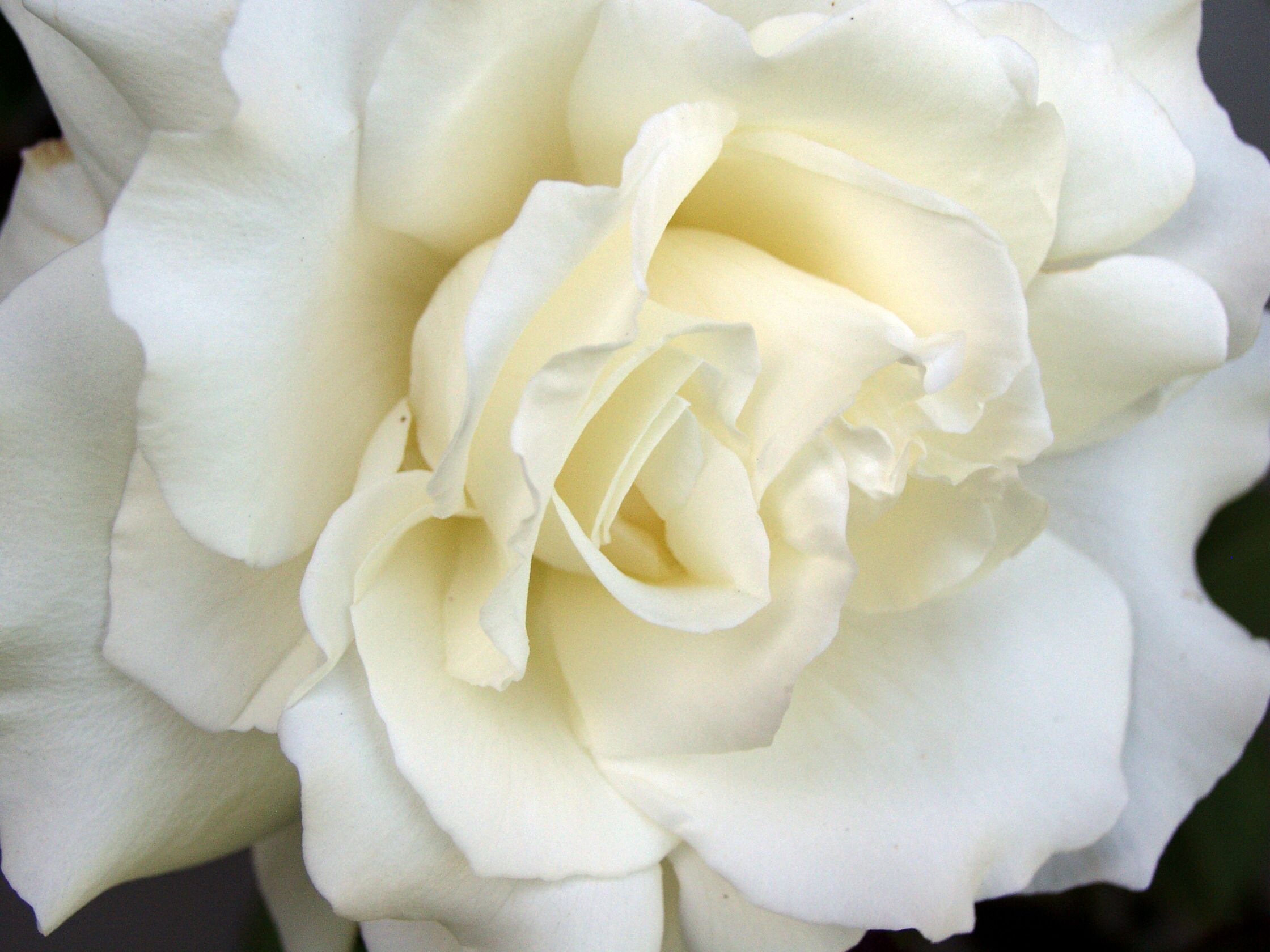 Pin by maite lozano on flowers flores pinterest flowers