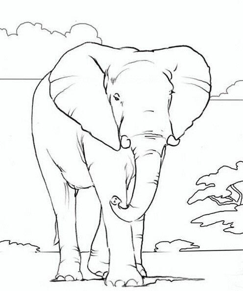 Pin Von Rahmi Aydogan Auf Cizim Elefanten Umriss Tiere Malen Malvorlagen Tiere