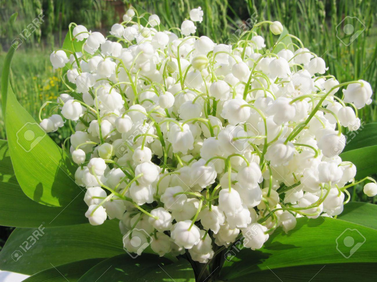 Jean patou joy perfume lily google all pinterest jean patou joy perfume lily google izmirmasajfo