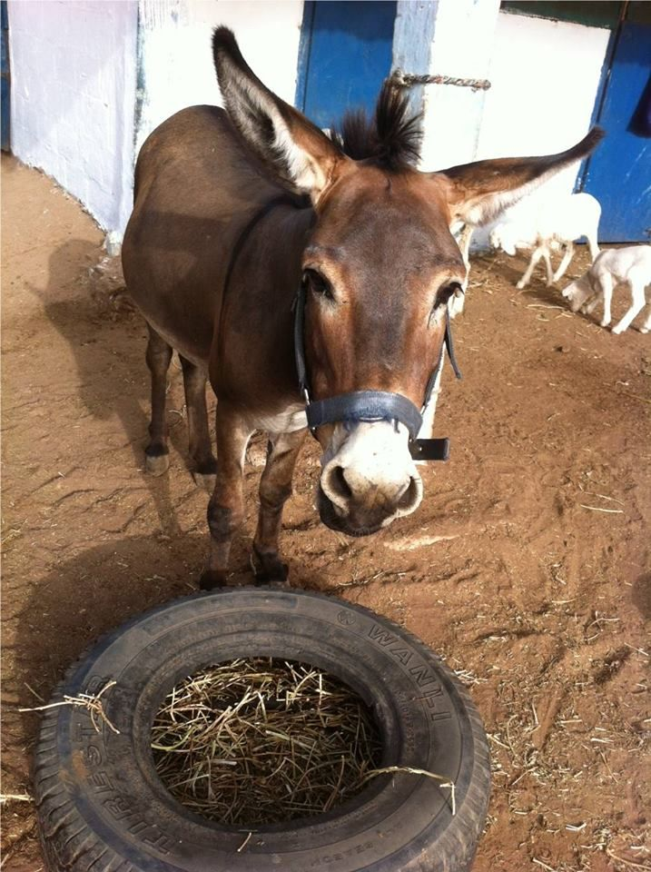 gambia horse and donkey trust facebook causes relationship