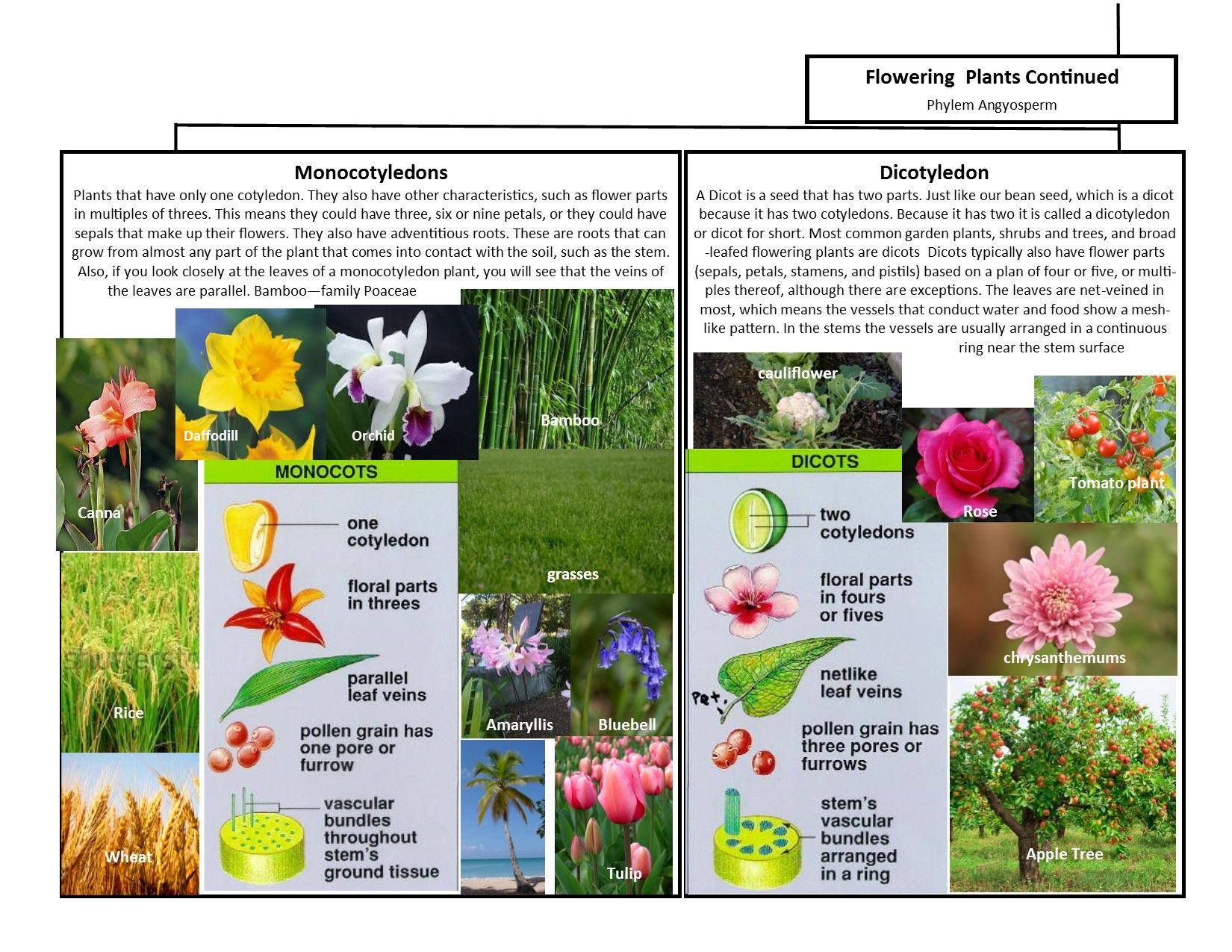 A Leah Bou original! Plant Classification Chart pg 2 of 2. I designed this  flow chart of the main 6 p…   Plant classification [ 1275 x 1650 Pixel ]