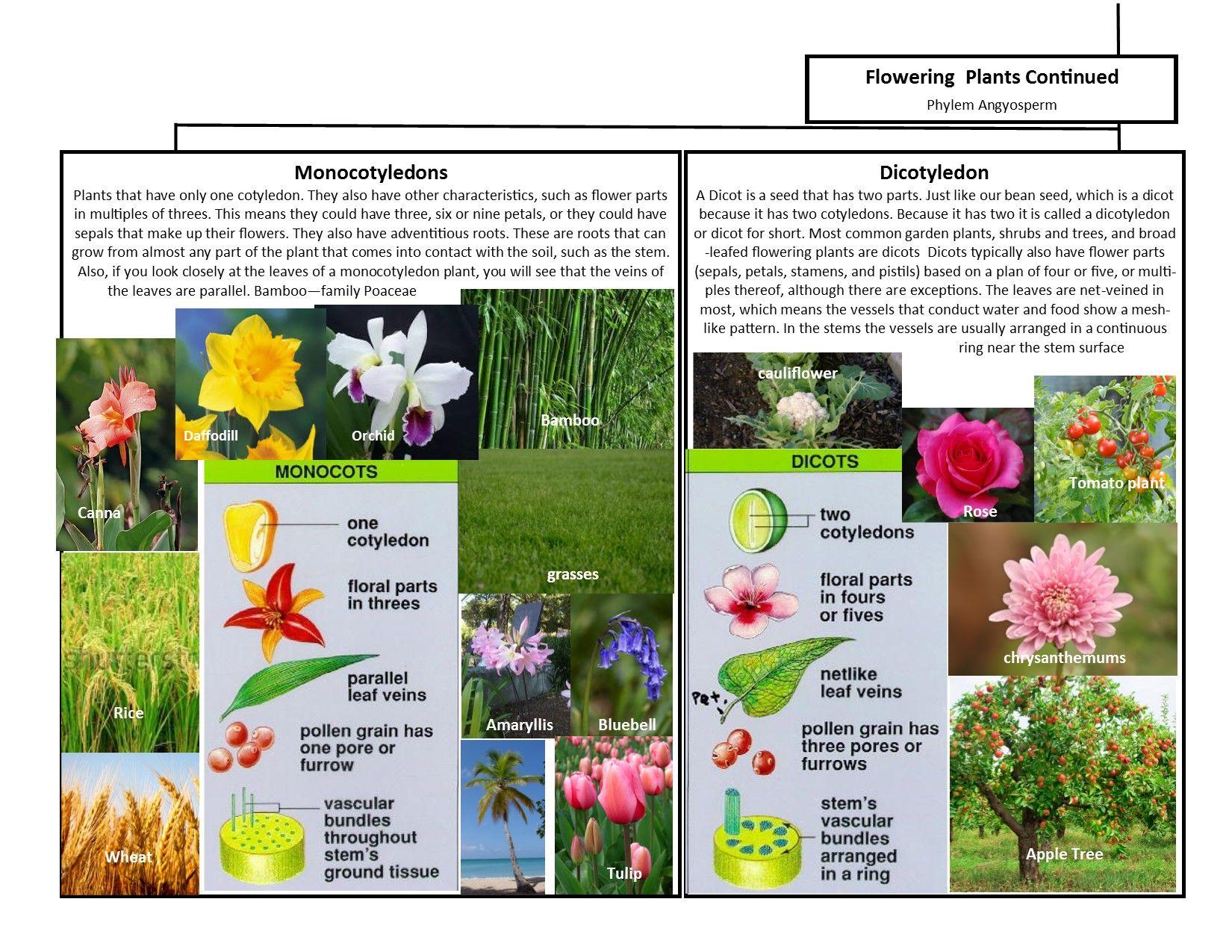 medium resolution of A Leah Bou original! Plant Classification Chart pg 2 of 2. I designed this  flow chart of the main 6 p…   Plant classification