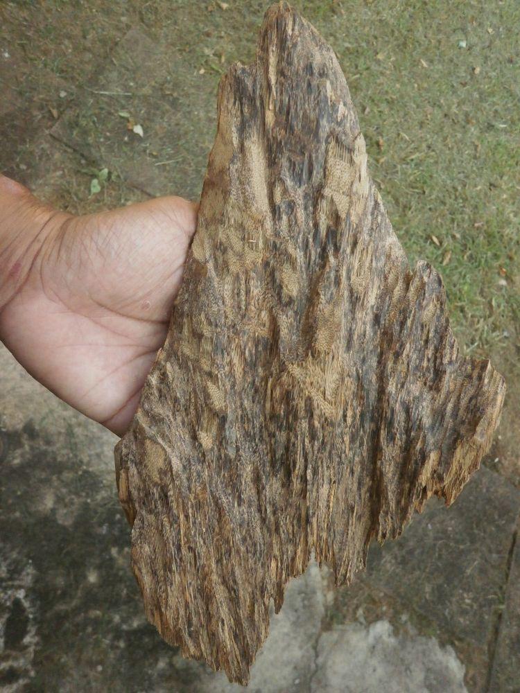 Malaysia Wild Harvested Agarwood Gaharu Oud Big Shape 260 grams