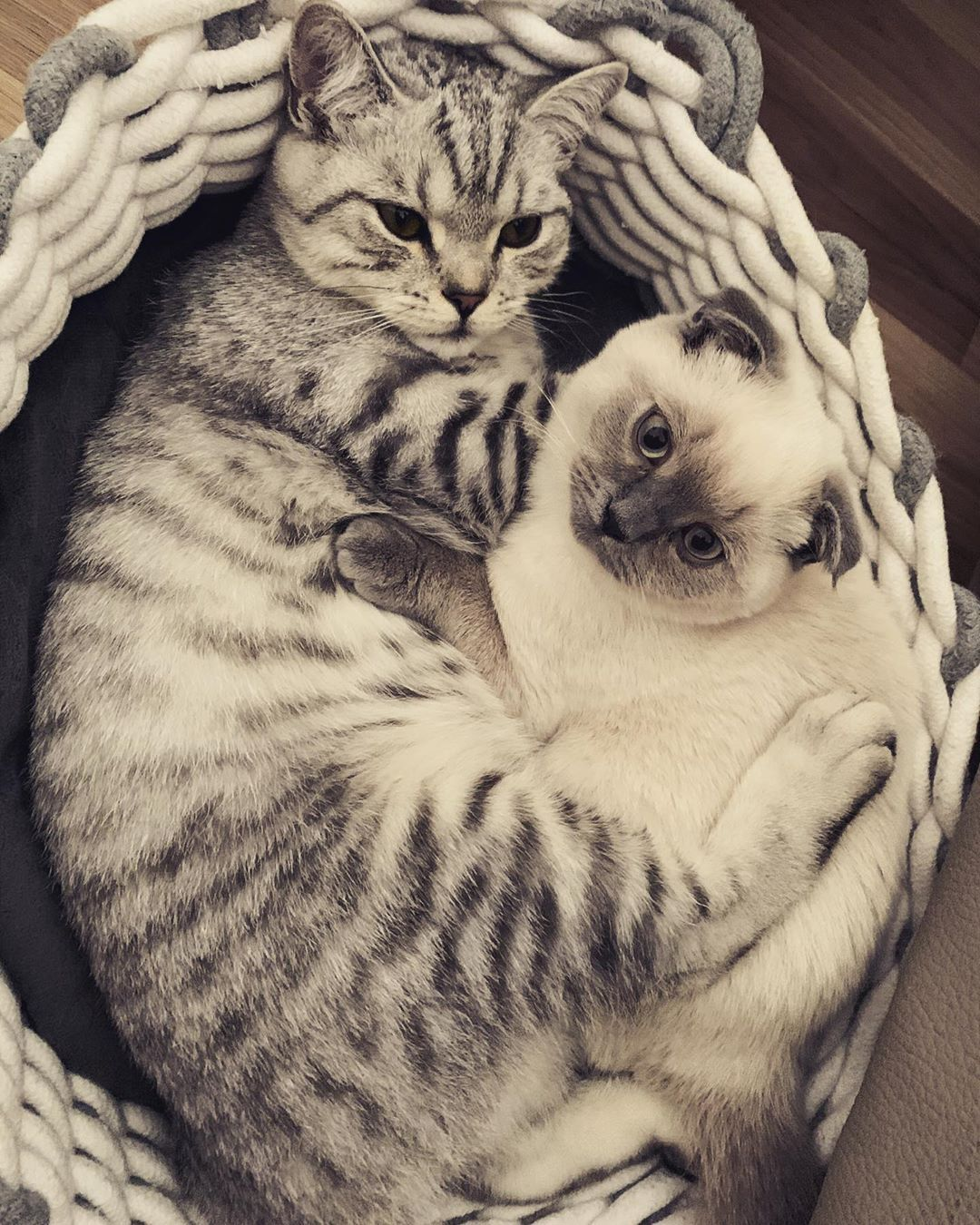 Pin On Cats Lovers