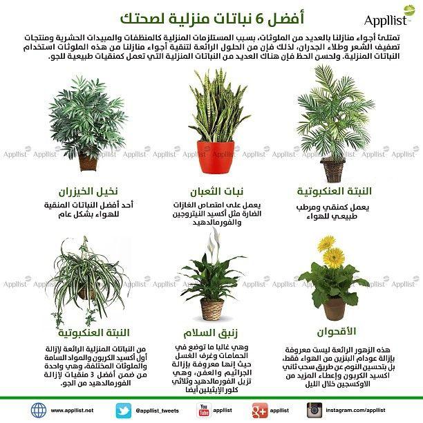 Log In Instagram Flowering House Plants Indoor Plant Care House Plants Indoor