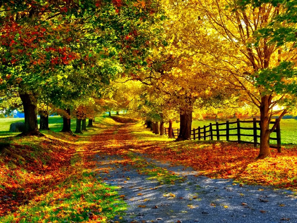 From the book where you might see the beautiful autumn leaves - Fall Wallpaper