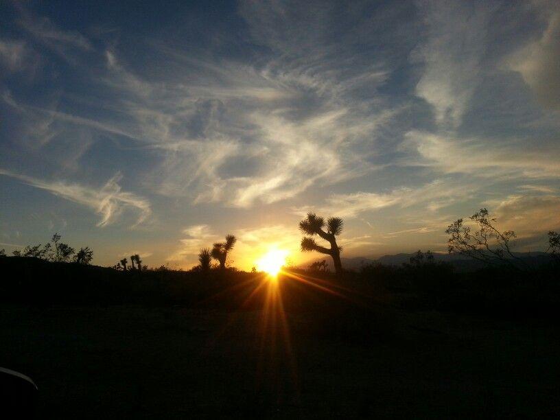 Sunset in Joshua Tree, CA