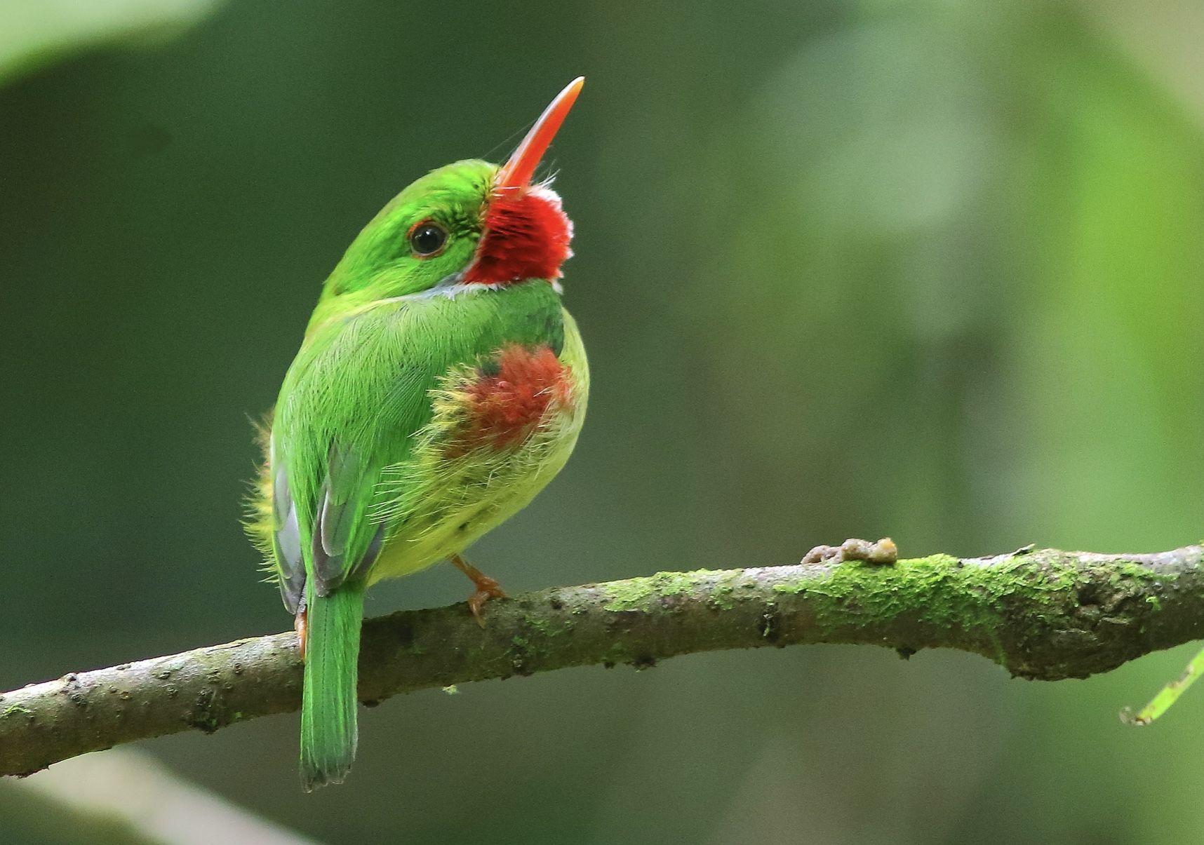 ป กพ นโดย Mboonyong ใน Birds 2