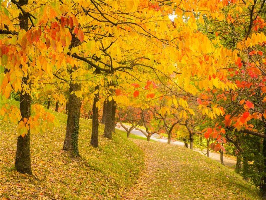 Incanto d'oro e rubino: Bologna, il foliage al parco di villa Ghigi