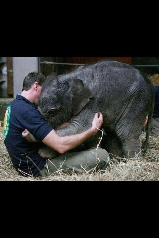 After being orphaned by the death of his mother, this is how this baby elephant greets the man that takes care of him.