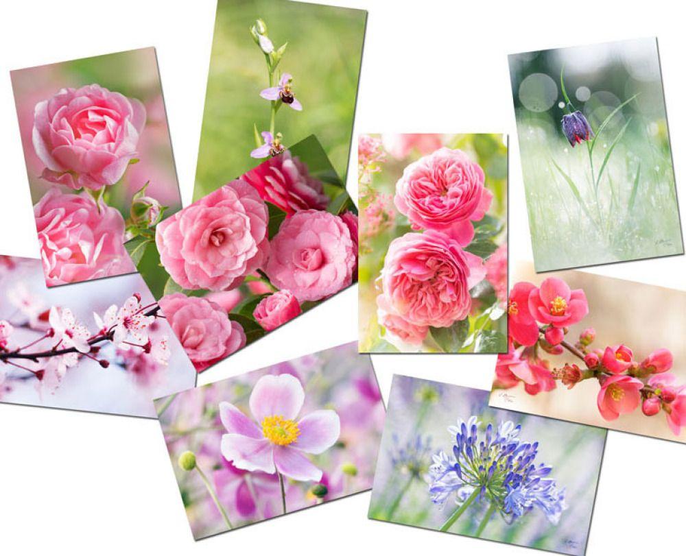 Ensemble 9 cartes postales fleurs, photos fleur | Carte postale, Postale