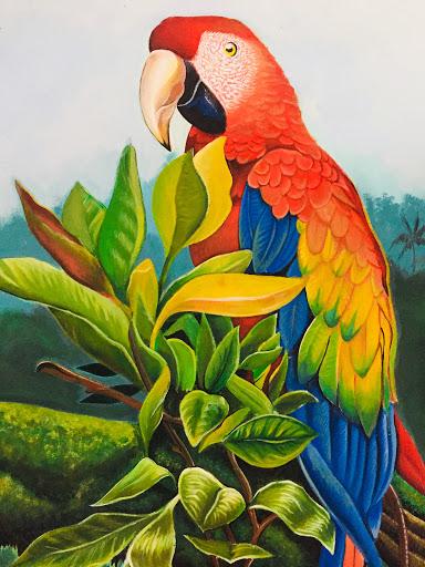Guacamaya Busqueda De Google En 2020 Pinturas De Aves Arte De Aves Pintura De Pajaros