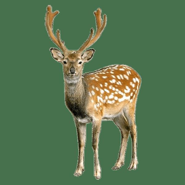Deer Color Palette Animals Wild Wild Animals List Animals