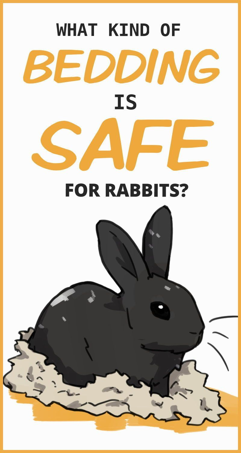 Pin On Rabbit Care Tips