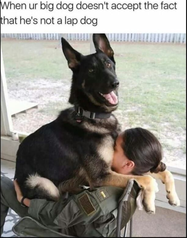 Funny Pictures Of The Day Dogpictures Funny Animal Photos Funny Dogs Funny Dog Pictures