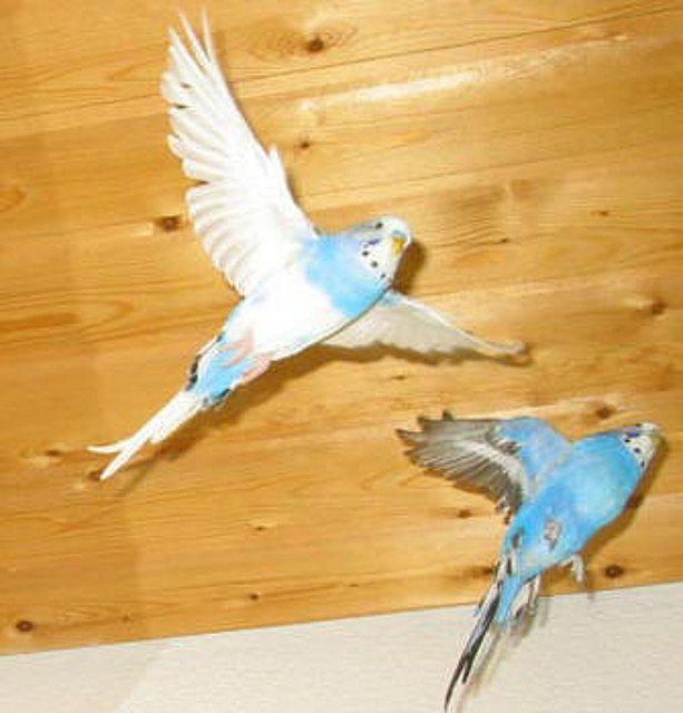 2 Bellos Pajaritos Volando Al Cielo Fotos Buscar Con Google Con