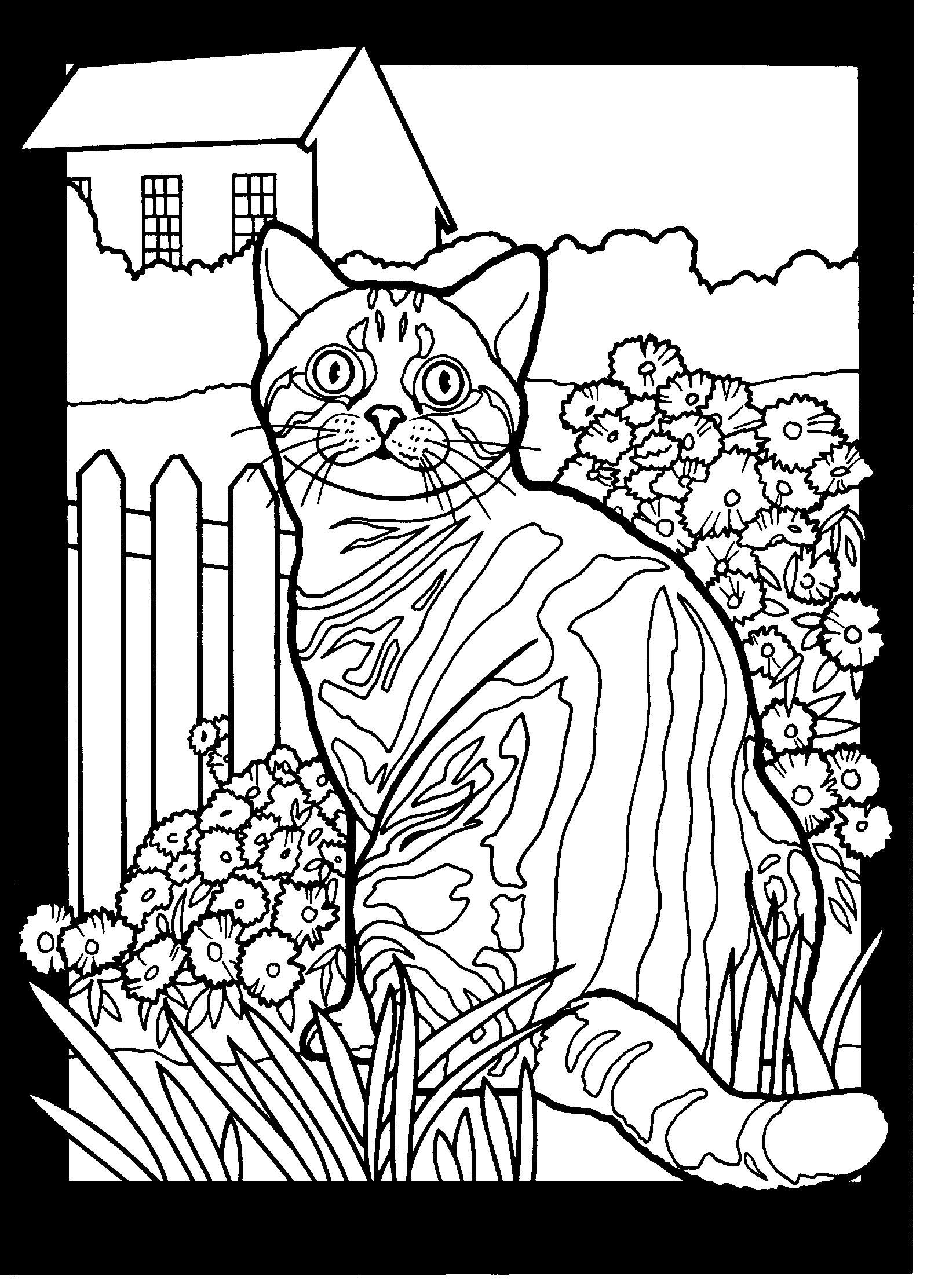 American Shorthair Marble Tabby Cat Coloring Page Coloring