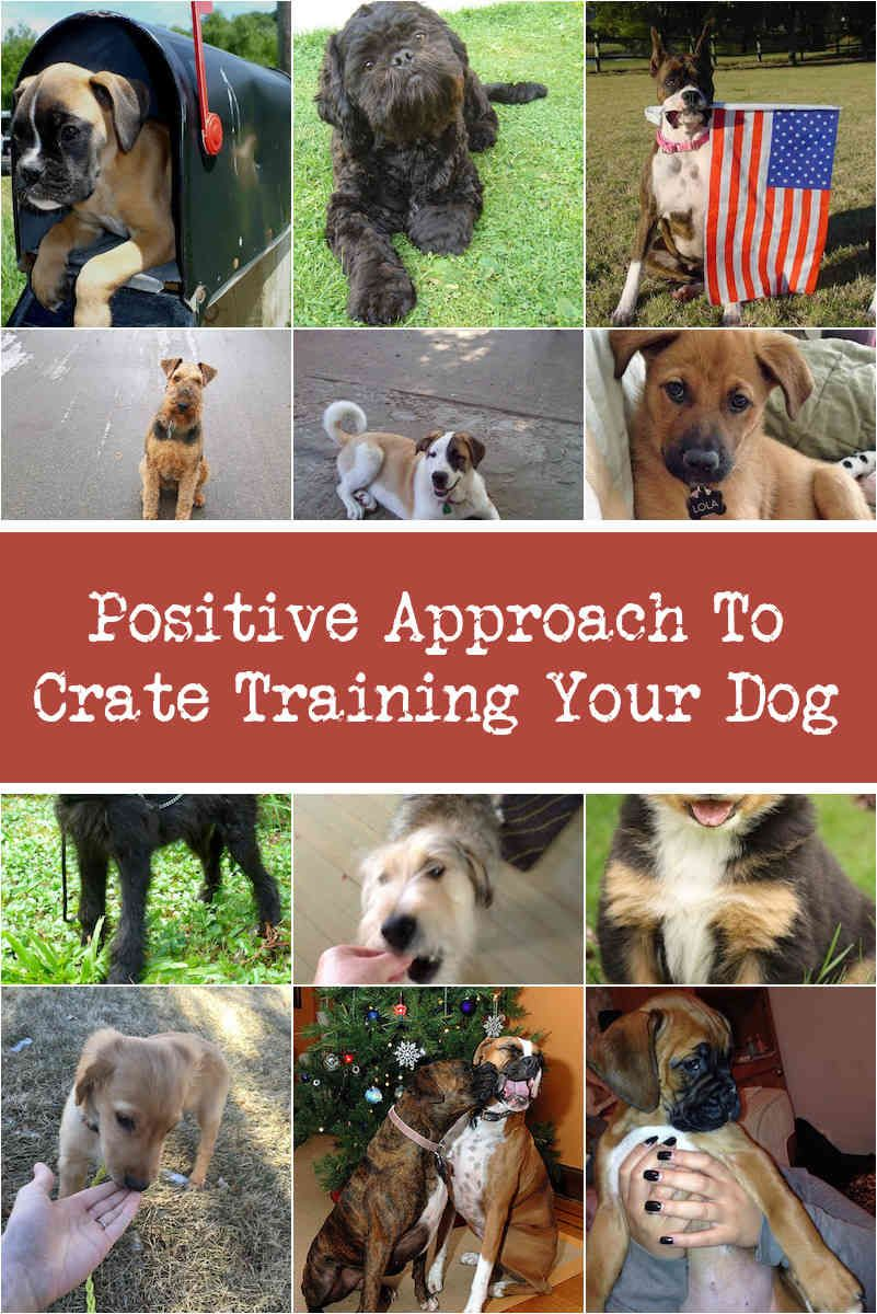 Breaking Bad Dog Behaviors With Positive Reinforcement Dog