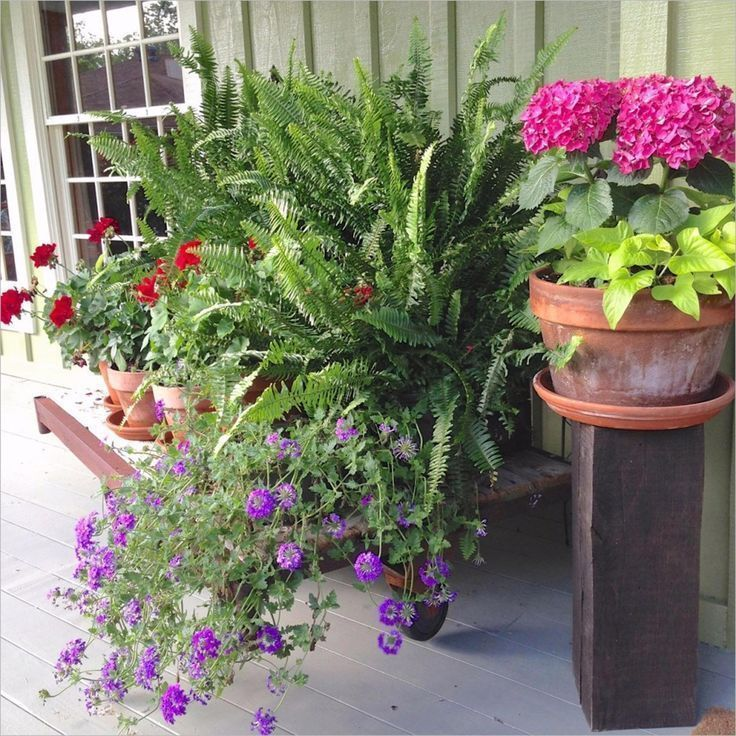 #Beautiful #Combination #Container #Container Gardening