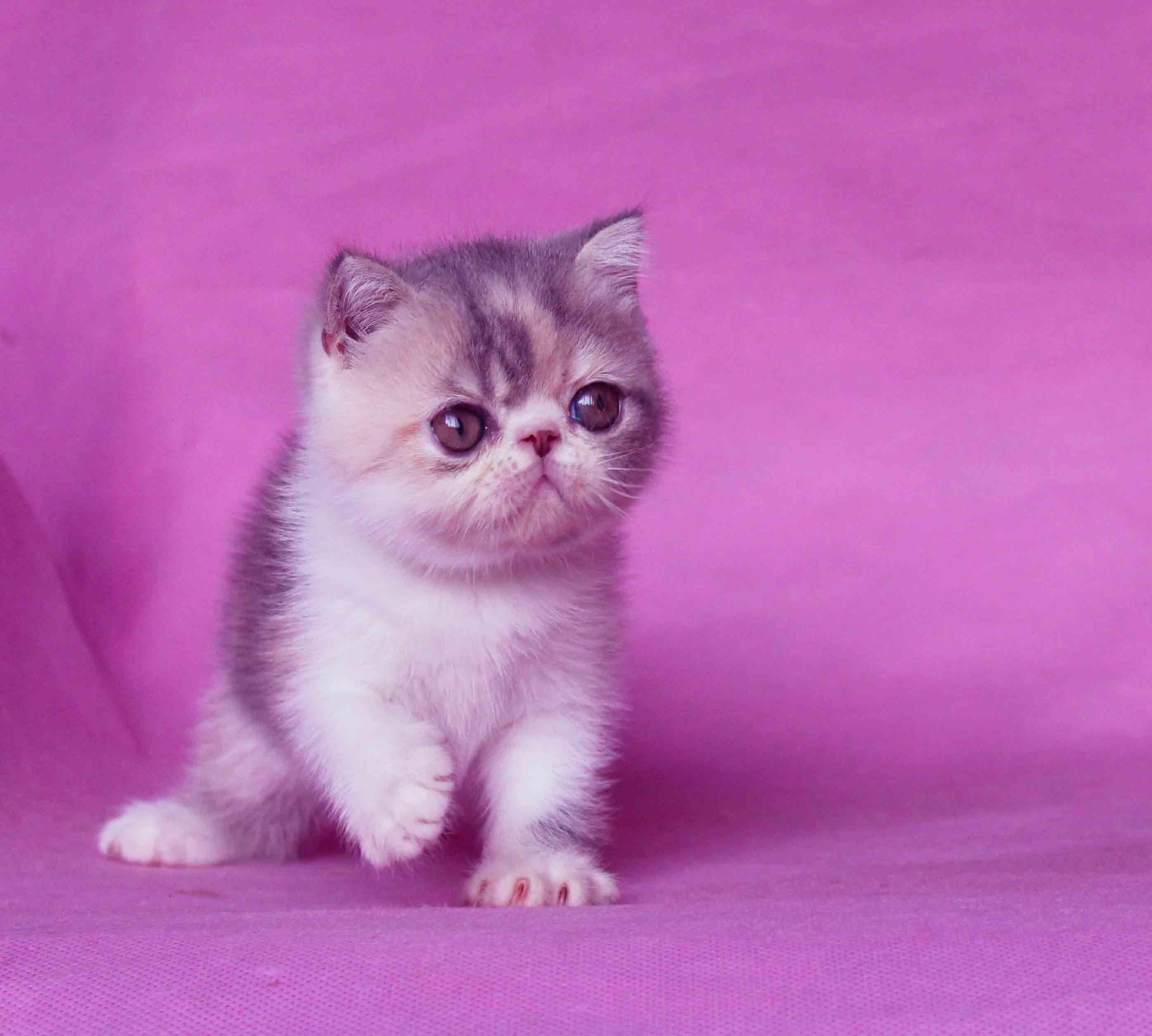Cute Cat With Images