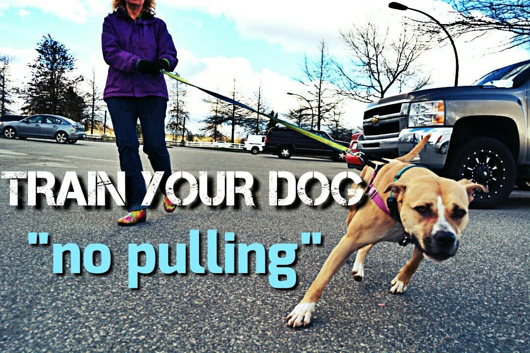 Train Your Dog To Not Pull On Walks Loose Leash Walking Dog