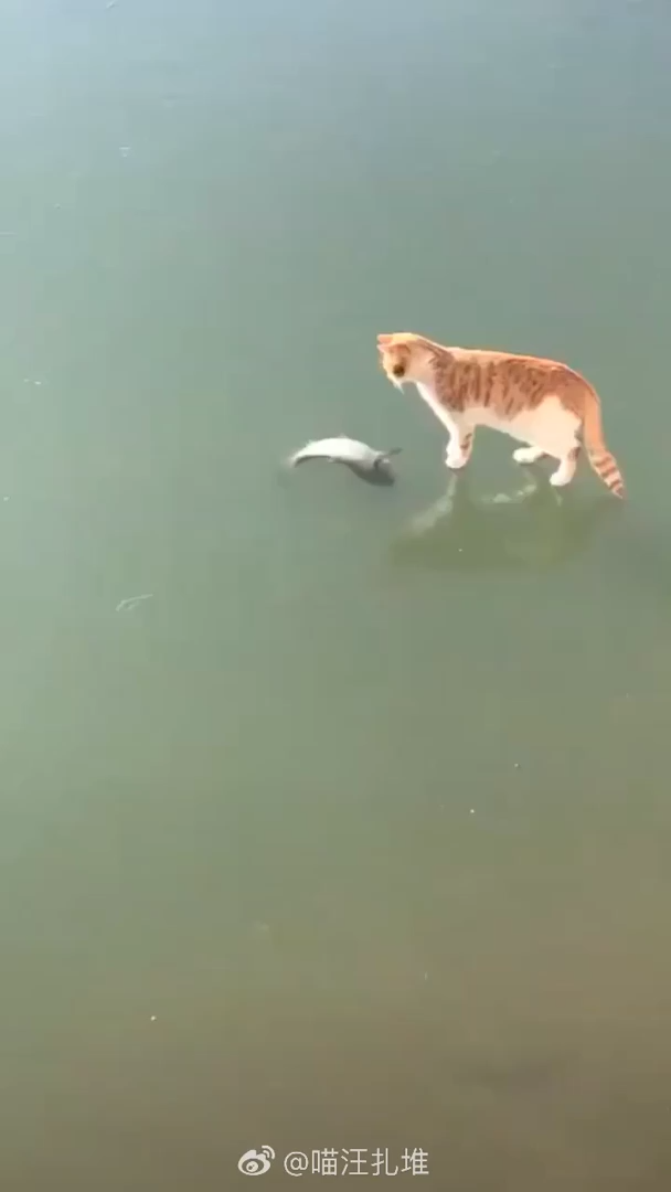 What Is Wrong With This Fish?!?!? Why Can't I Get