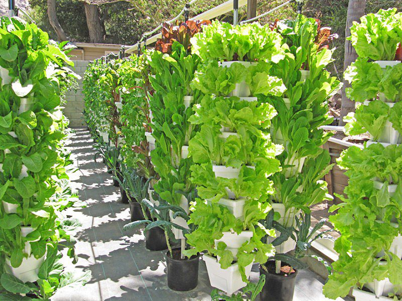 Alegr a fresh lettuce commerial berti gro hydroponic for Indoor gardening retailers