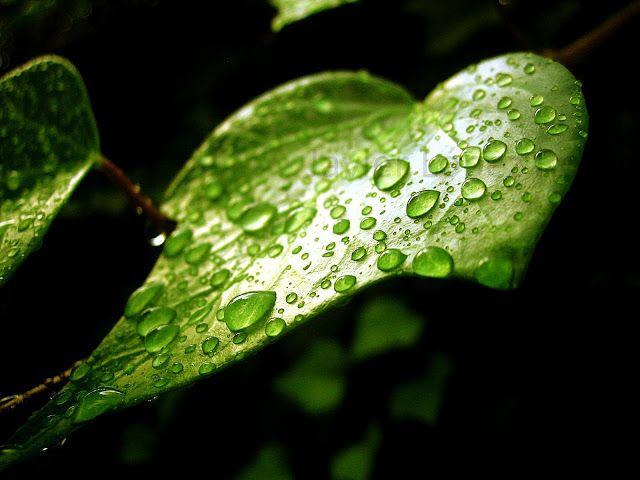 Hay quien lo llama fotografía: Cuando llueve