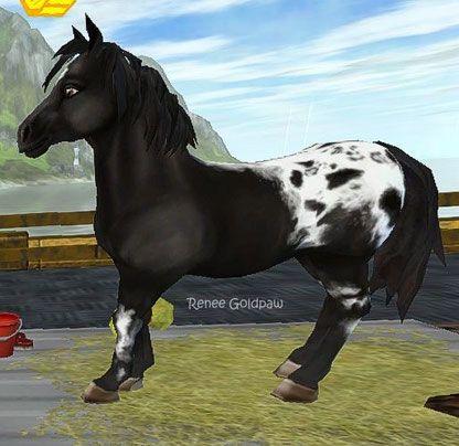 Starstable Datenbank Pferde Pferde Pferd Zeichnungen