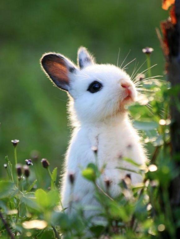 Curious Rabbit Cutest Paw 美しい動物 ペット用品 かわいいウサギ
