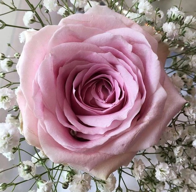 Pin by Jean on BEAUTIFUL FLOWERS (With images) | Beautiful ...