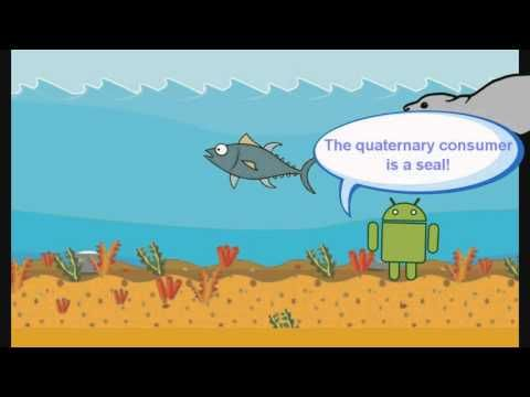 Food Chain Animation - YouTube Science Food Chains Pinterest