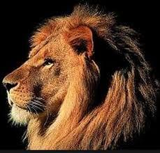 Afbeeldingsresultaat voor leeuwenkop