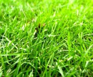 Desherbant Naturel Fait Maison Avec De L Eau Du Sel Et Du Vinaigre Avec Images Desherbant Naturel Deserbant Naturel Jardins