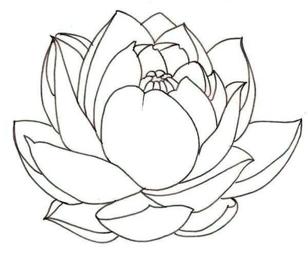 lotus flower coloring pages - photo#26