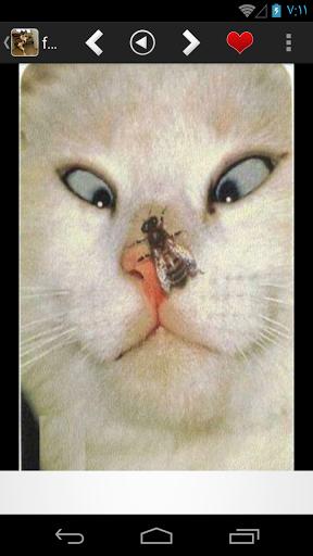 صور و خلفيات مضحكة جديده Hd هو تطبيق صور مضحكة جميلة يحتوي على مجموعة كبيرة من الصور المضحكة مكتوب عليها تعليقات Funny Cat Images Funny Cats Funny Cat Pictures