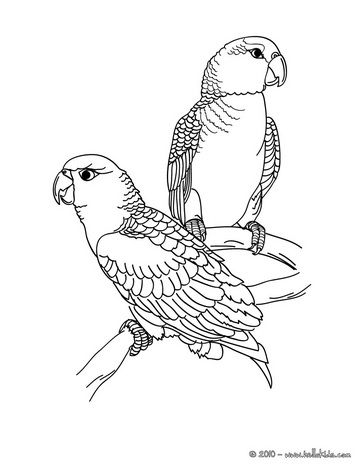 Parrot picture coloring page | Loros | Pinterest | Pintar, Dibujos y ...
