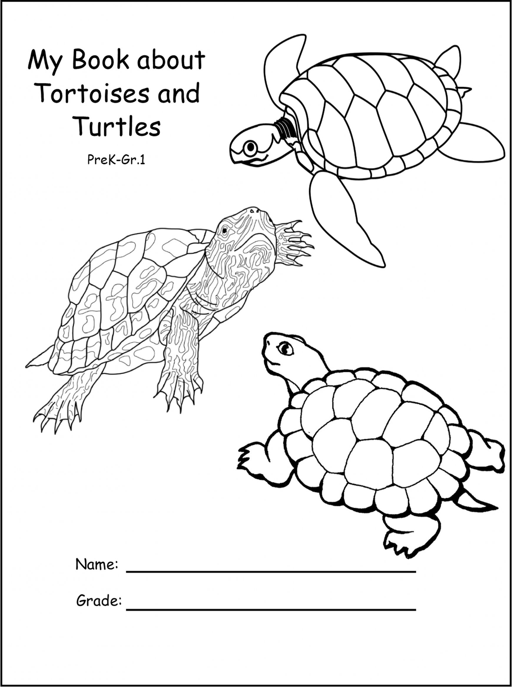 Sea Turtle Color Sheets And Worksheets For Preschoolers