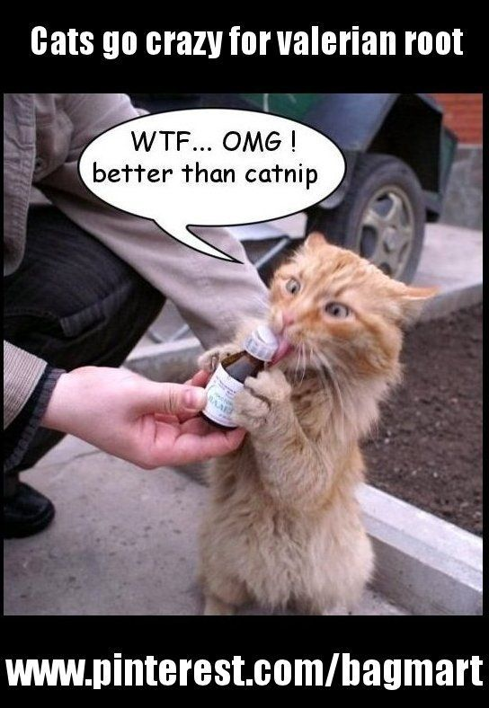 Lolcats Is The Best Place To Find And Submit Funny Cat Memes And Other Silly Cat Materials To Share With The World We Find The Funny Cats That Make You Lol