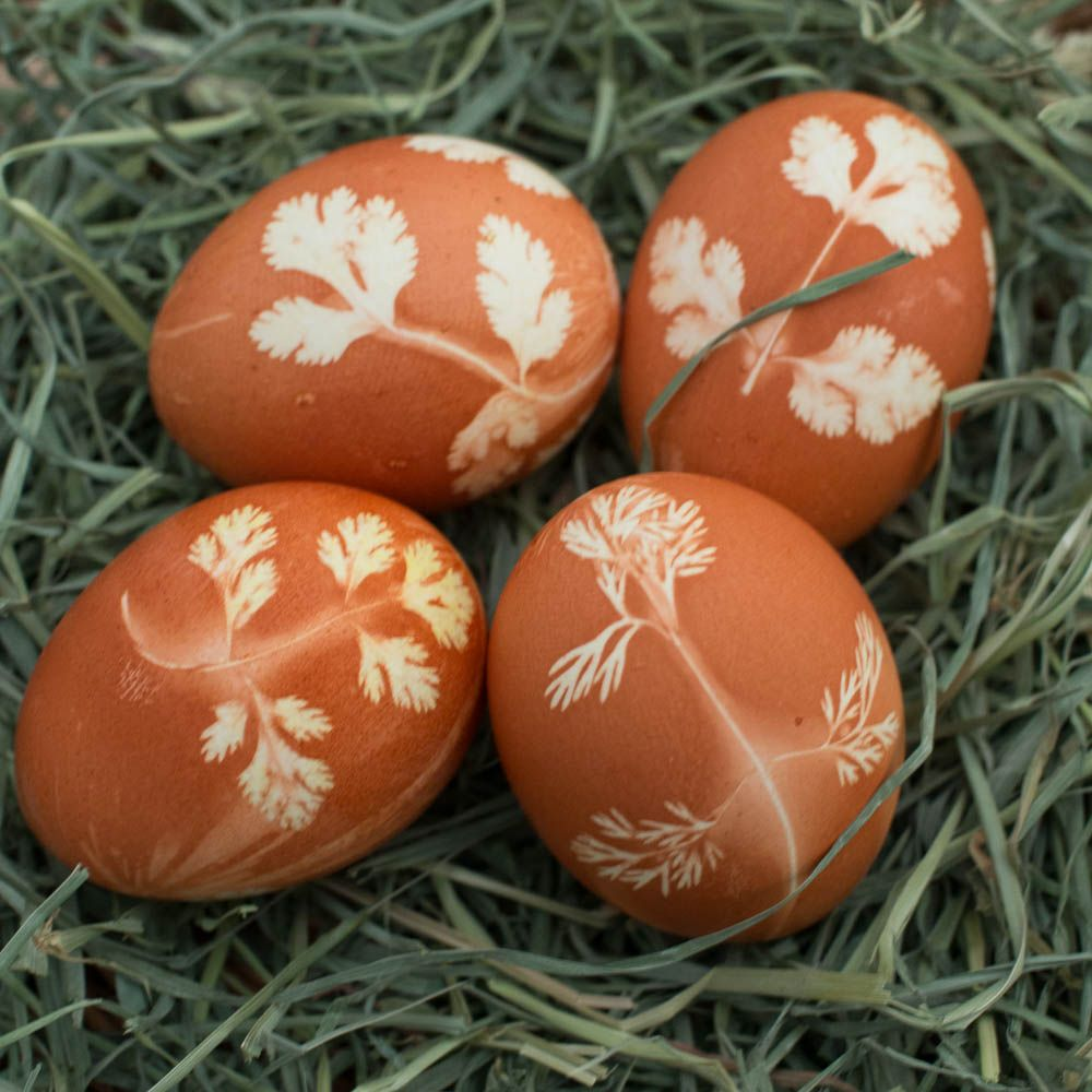 Natural Herb Stenciled Easter Eggs - Easter eggs made with natural dyes using herbs to create a pretty pattern.